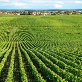 Corso per capo azienda settore agricolo